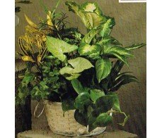 Traditional Floral FR55-12 Plants